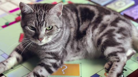 Monopoly Classic (Better Cat) TV Advert