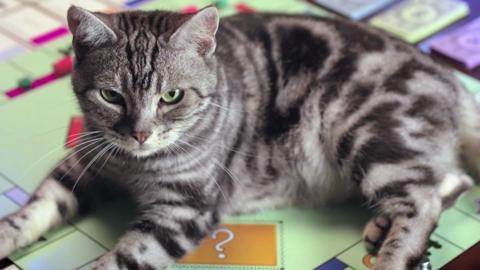 Monopoly Better Cat TV Commercial
