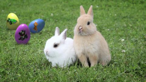 Punny Bunnies: Baby Carrots